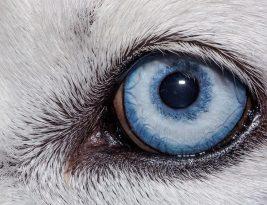 دنیا از نگاه حیوانات