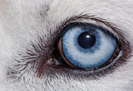 حیوانات چطور به دنیای اطرافشان نگاه می کنند