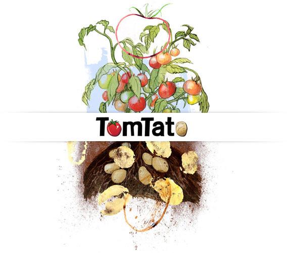 گیاه Tomtato