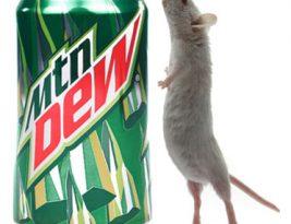 موش در پپسی